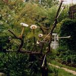 Trompetenbaum in Glashagen