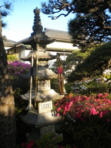 Natural trumpets during sunrise in Chigasaki. A very nice japanese garden
